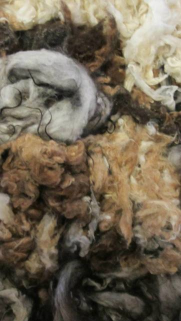 All of this is wool from my flock of sheep! I love the array of natural colors. Most of this is Icelandic.