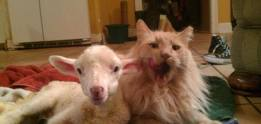 Woolfred and Edward