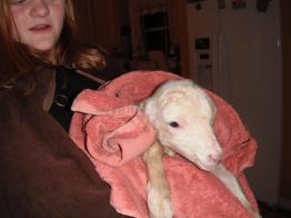 Woolfred newborn